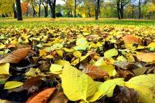 autumn-532133_1280
